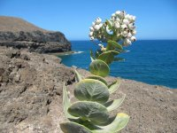 Vegetación típica de la isla balear