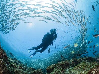 Buceo con tiburones en mar en la Costa de Teguise