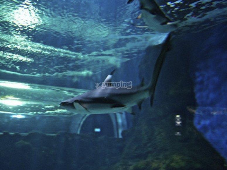 Avistando un tiburón blanco