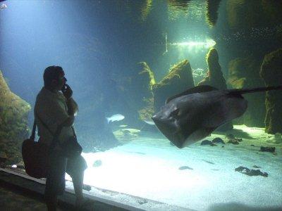 兰萨罗特岛水族馆成人票