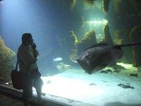 Entrada para adulto a acuario en Lanzarote