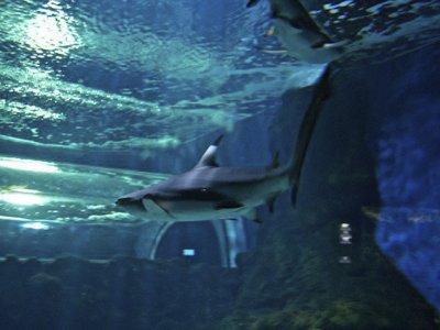 兰萨罗特岛水族馆儿童票