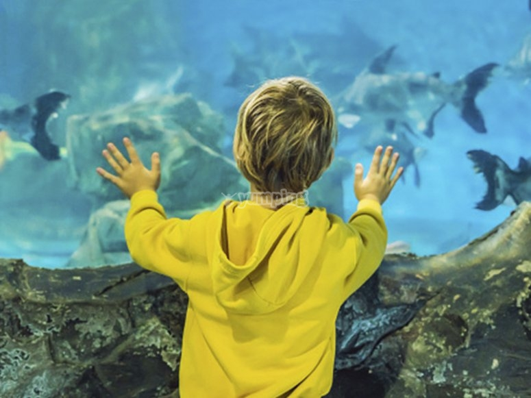 Niño disfrutando de una visita al acuario