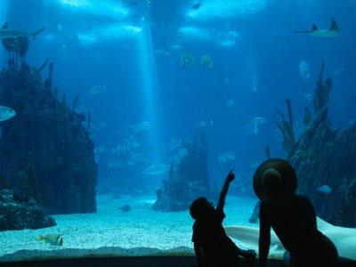 兰萨罗特岛2个儿童和2个成人的水族馆入口