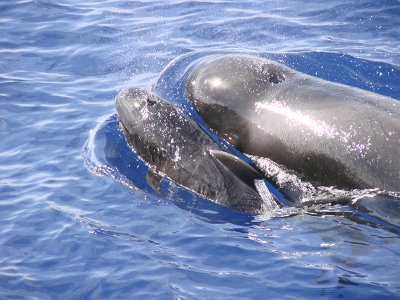 Whale watching and snack adults Los Cristianos