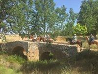 Pequeno puente junto a los arboles
