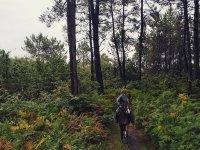Camino francés a caballo