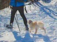 Raquetas de nieve con perro