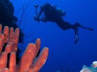 Haciendo un curso de Open Water Diver de PADI