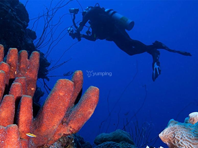 Fare un'immersione subacquea