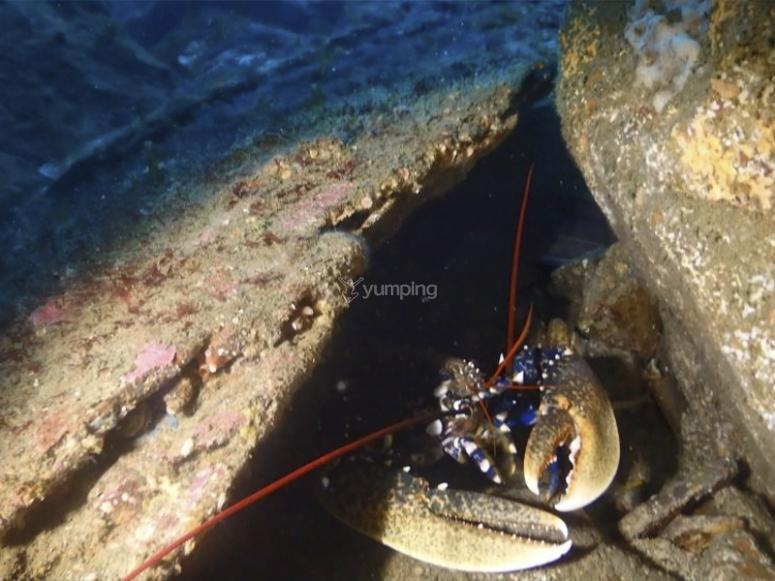 Vedere la fauna marina di San Esteban de Pravia