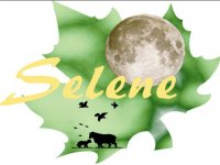 Selene Team Building