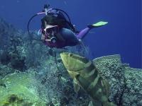 Immersioni per ottenere il certificato Advanced Open Water Diver