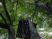 Vive la aventura en los árboles