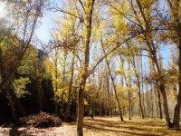 Bosques ocres