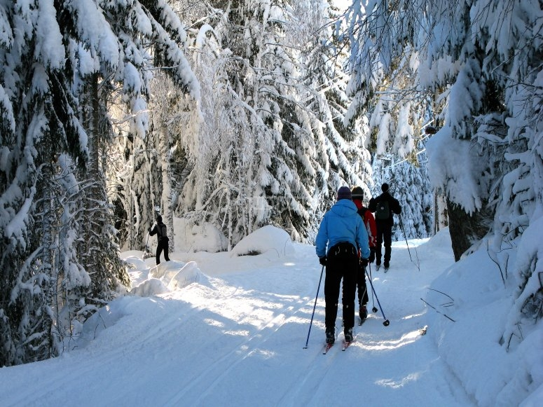 Group practicing cross-country skiing