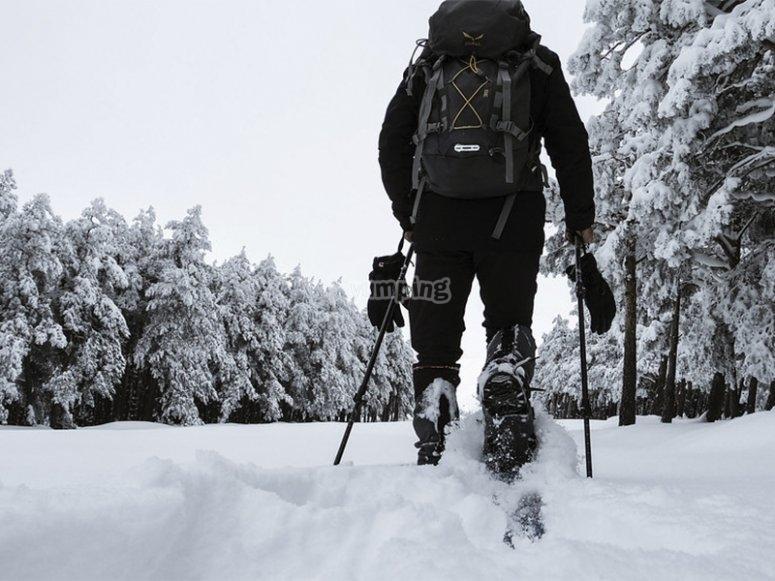 Explorando con raquetas de nieve
