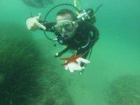 与海星潜水