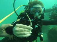 Diving under the sea