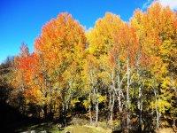 Colores del otono