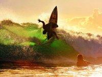 Surf con profesionales