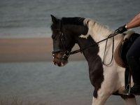 骑在马背上