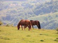 马匹在山上