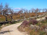 Caminos poco transitados para ir en bici