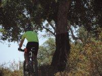 Bajo los árboles en bicicleta de montaña