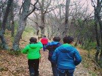 Rutas por el bosque