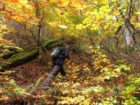 Bosques con encanto en otono