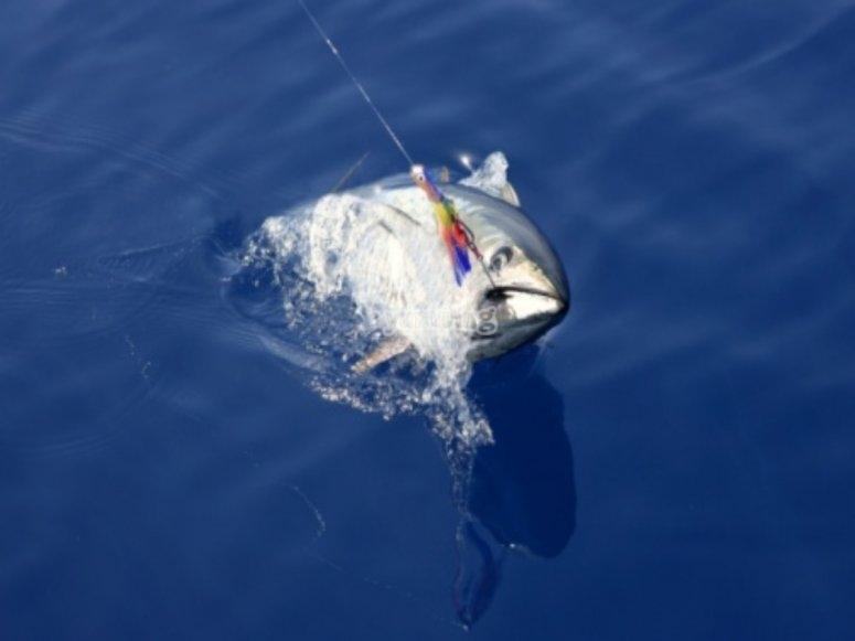 在地中海钓鱼