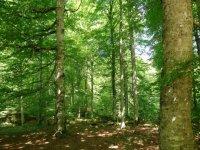 Estupendos bosques