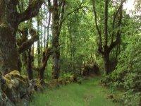 绿色自然景观