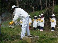 iniciate en la apicultura