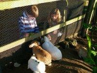vista a los conejos