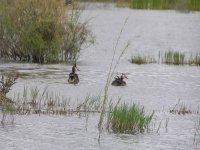 aves maritimas en el agua