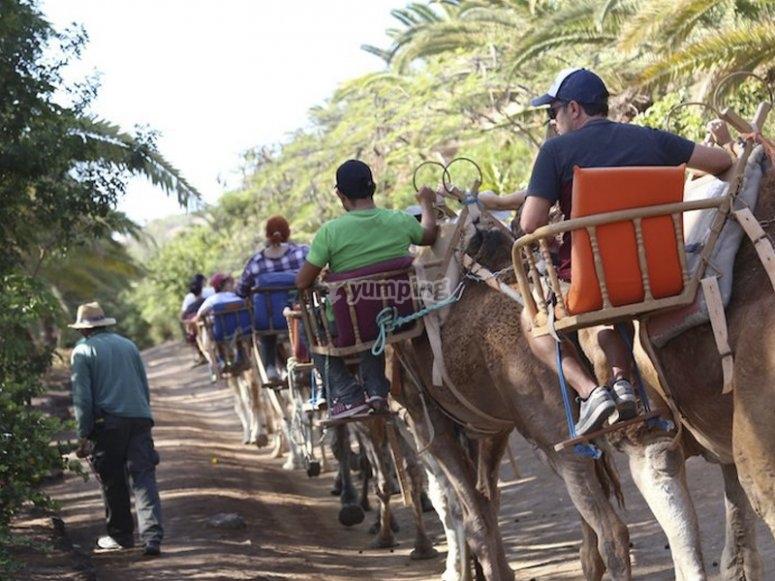 开始我们的骆驼路线