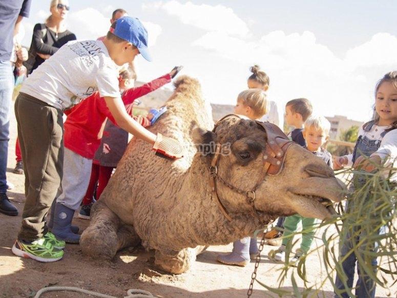 骑骆驼的作坊