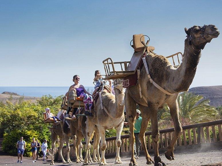享受骆驼之旅