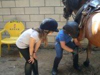Verificando la herradura limpiando cascos