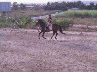 Mejorando técnicas de equitación
