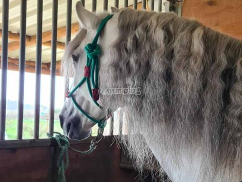 Equestrian classes