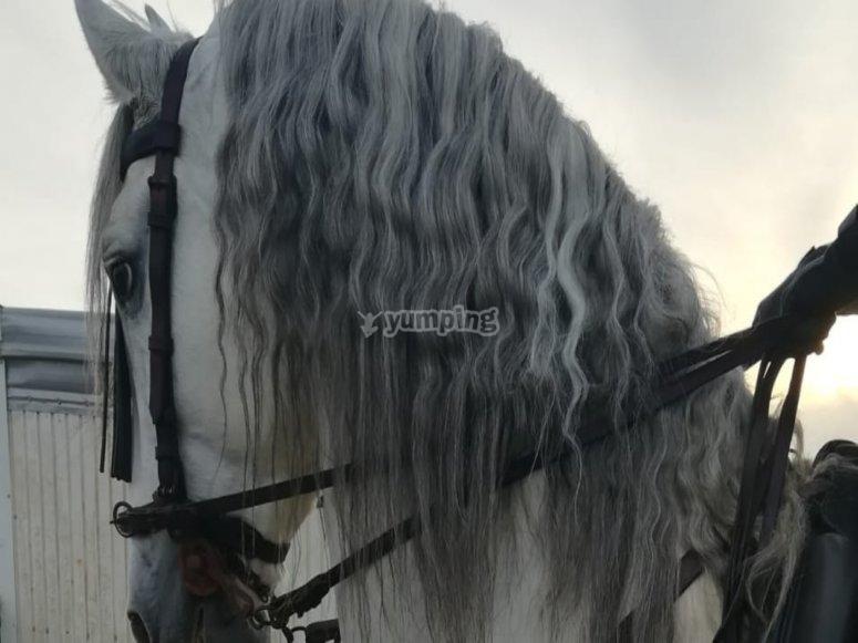 Equestrian in Cádiz