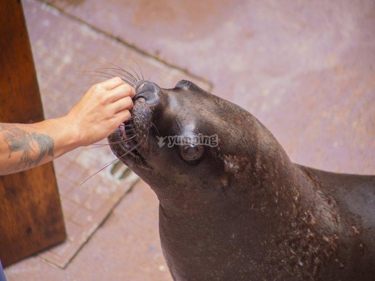 Nourrir les lions de mer