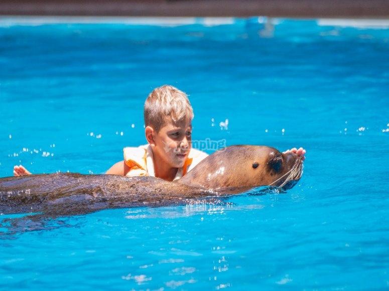 Enfant se baigner avec les otaries
