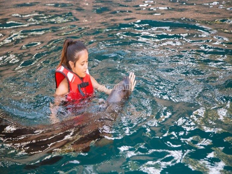 Fille avec des lions de mer