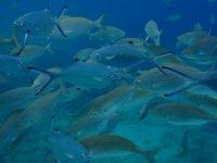 banco di pesci a fuerteventura