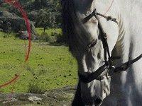 Caballo de color blanco