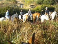 Horse riding in group